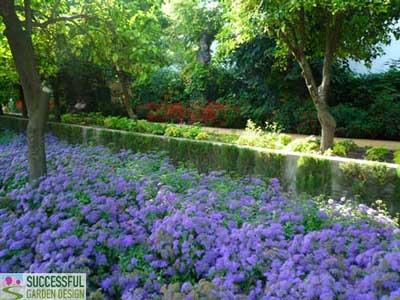 Purple Ageratum & Red Salvia in background