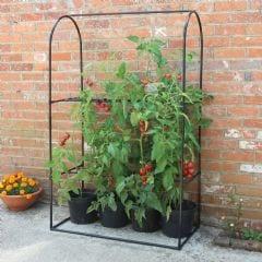 Haxnicks Tomato Frame & Support